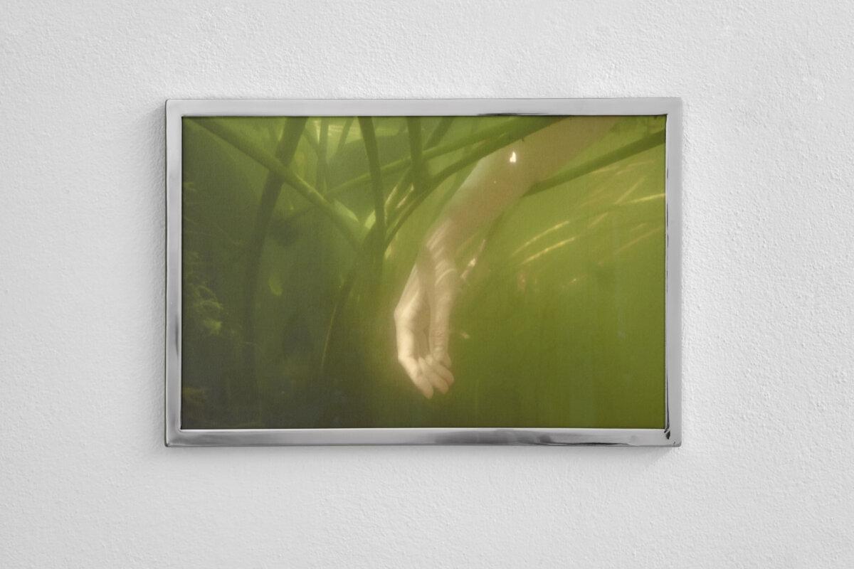 Waterlily Jaguar - Nona Inescu